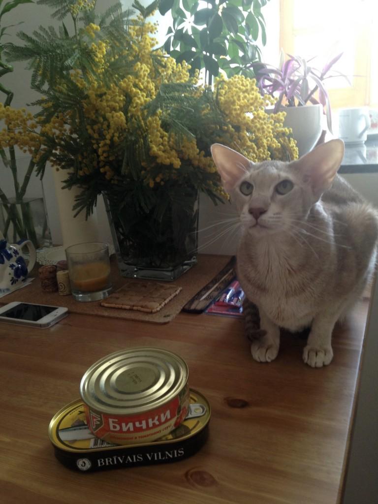 cat_bychki_v_tomate